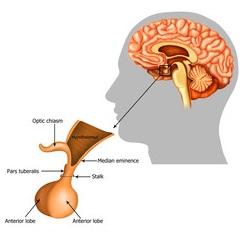 tumora glandei hipofizare și pierderea în greutate