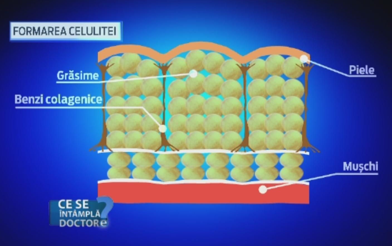 Dieta pastile Watchdog | Revizuirea Zantrex-3 High Energy Fat Burner