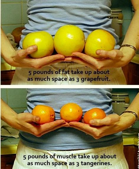 pierderea de grăsime phd cel mai bun arzător de grăsimi pentru pierderea în greutate
