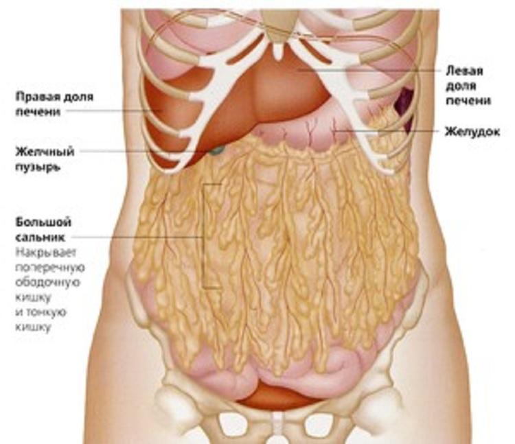 cum să arzi grăsimea organelor interne slăbește ca bărbat