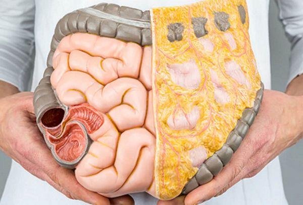 cum să arzi grăsimea organelor interne cel mai eficient și sigur supliment pentru pierderea în greutate