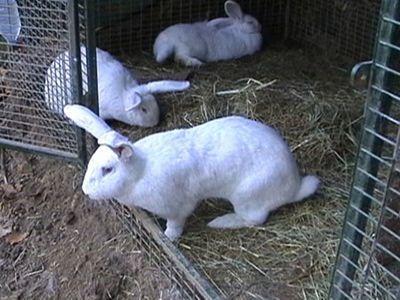 iepurii pierde în greutate poate pooping ma face să pierd în greutate