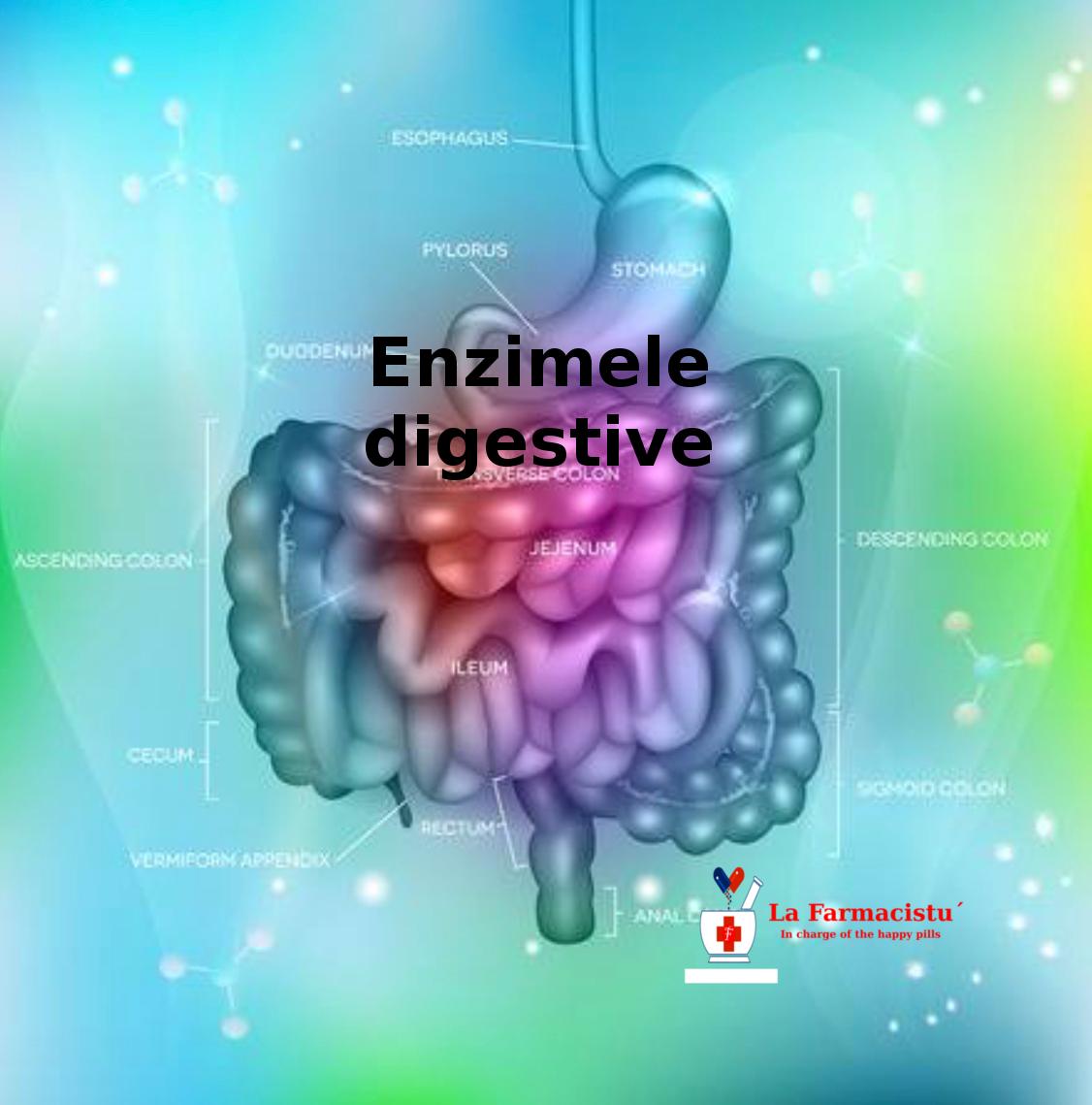 enzime naturale de ardere a grăsimilor poate scădea în greutate ajută la germeni